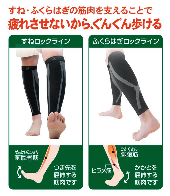 すねロックライン…前頚骨筋(つま先を屈伸する筋肉)をサポート。ふくらぎロックライン…腓腹筋、ヒラメ筋(かかとを屈伸する筋肉)をサポートします
